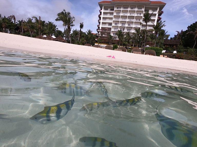 シャングリラのビーチは浅瀬に魚がたくさん