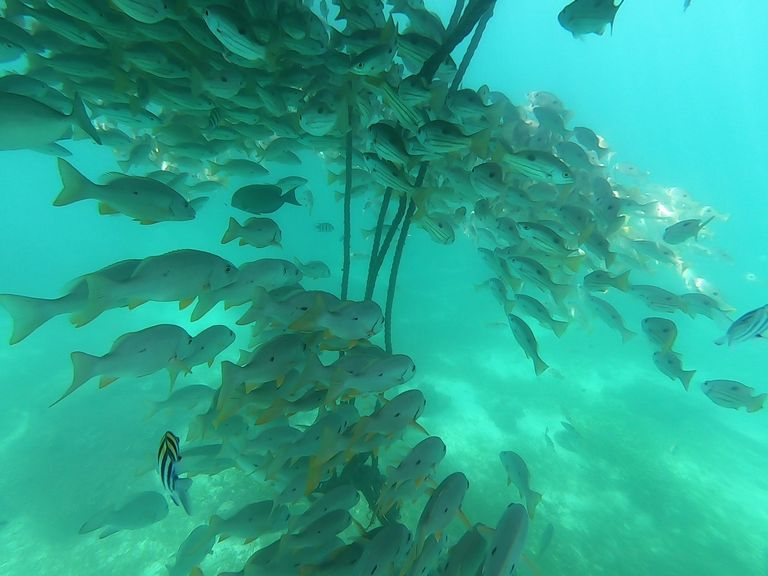 シャングリラ浮島の下