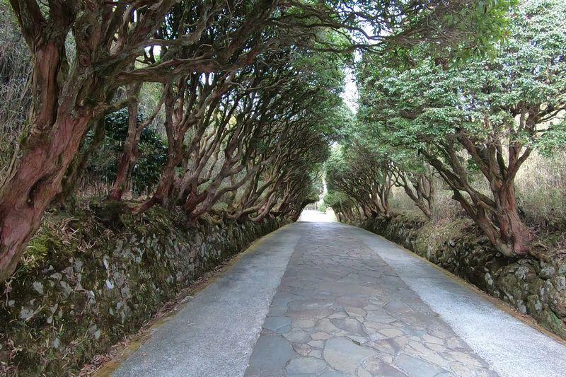 恩賜箱根公園 正面園路