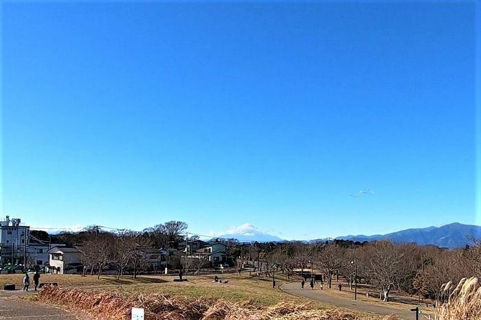 茅ヶ崎里山公園 湘南の丘