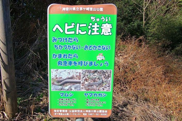 茅ヶ崎里山公園 マムシ