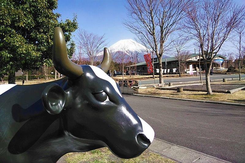 あさぎりフードパーク 牛