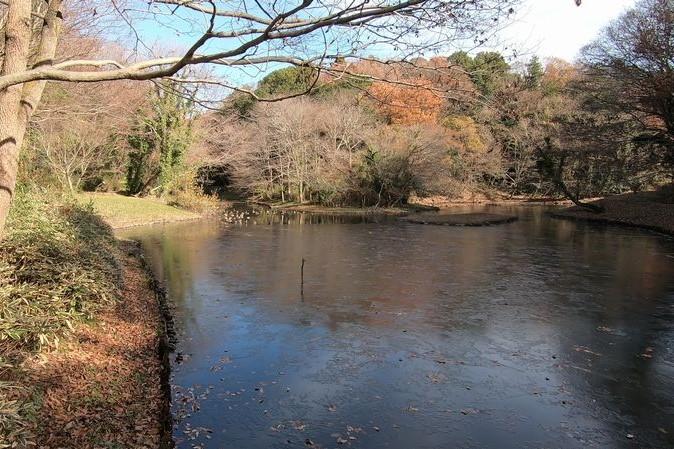 座間谷戸山公園 水鳥の池