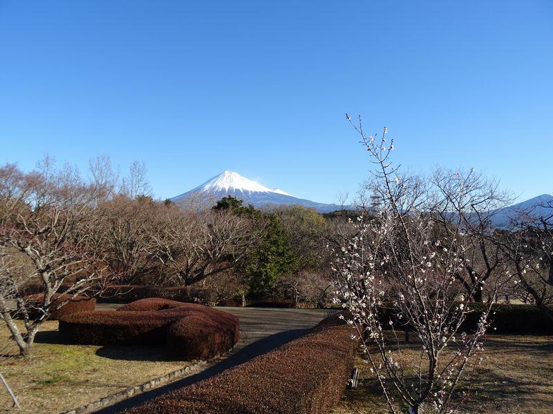 岩本山公園 富士山 梅園